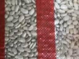 Export type white 8 and 9 (peeled, sorted)Fasulye - фото 6