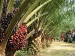 """Пальмовое масло """"Малазия"""" (Palm oil) - photo 1"""