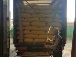 Продам грецкие орехи оптом