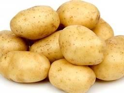 Картошка 1 качество из Турции