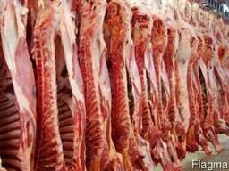 Куры Говядина мясо