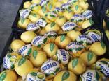 Лимоны из солнечной Турции - фото 5