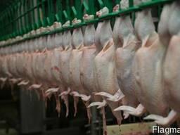 Mutton meat - фото 1