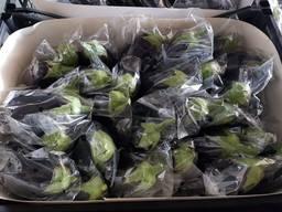 Оптовая продажа баклажанов из Турции
