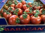 Овощи 2018/2019 новый сезон от фабрики babacan import export - фото 2
