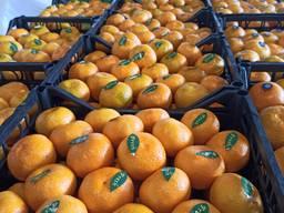 Помидоры; огурцы; перец; кабачок; баклажан; апельсин; мандарин; лимон; грейпфрут