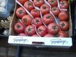 Помидоры, вишня, лимоны, апельсины, любой сезонный товар - фото 1