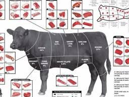 Продам говядину в Китай