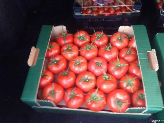 Продам оптом овощи и фрукты из Турции