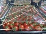 Продам оптом овощи и фрукты из Турции - фото 2