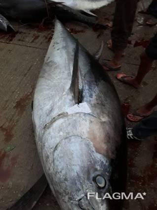 Продажа оптом морской рыбы из Африки в любую страну