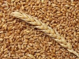 Agricultural enterprise