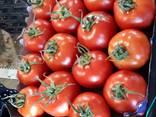 Свежие овощи высшего качества - фото 2