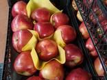 Яблоко свежее Турция - фото 3